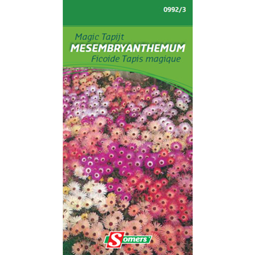 Somers magic tapijt 'Mesembryanthemum'